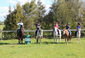 Hills and Hollows Horse Riding School