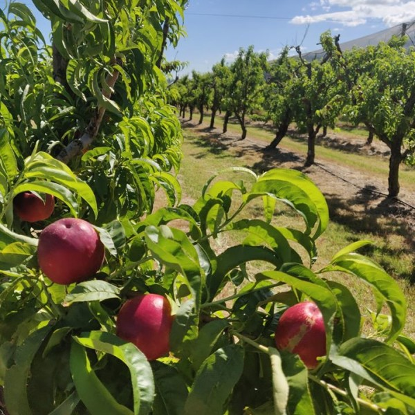 Cedar Creek Orchard Fruit Trees