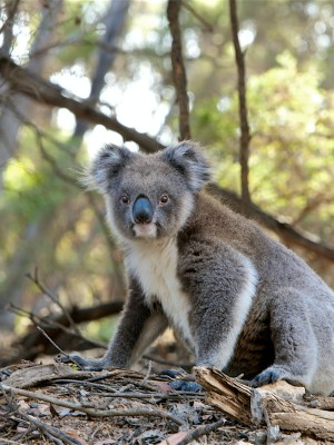 Australian Wildlife Sanctuary