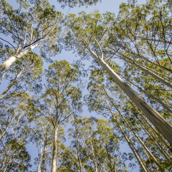 Native Trees at Thirlmere Lakes
